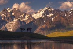 Beautiful horses stand over a mountain lake in the background of mountains Stock Images
