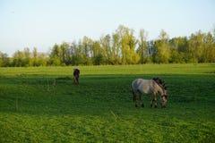 Beautiful horses. Two beatiful horses Stock Photography