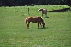 Beautiful horses Stock Photo