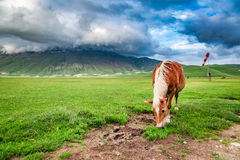 Beautiful horses in valley near Castelluccio, Umbria Stock Photography