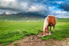 Beautiful horses in valley near Castelluccio, Umbria Royalty Free Stock Photos