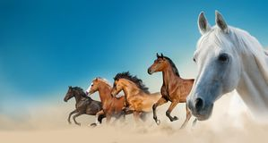Beautiful horses on the wild stock photography