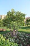 Olive tree beautiful hotel Tekirova, Turkey royalty free stock photos
