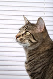Beautiful House Cat Stock Images