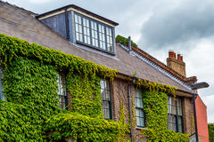 Beautiful house covered with green ivy Royalty Free Stock Photos