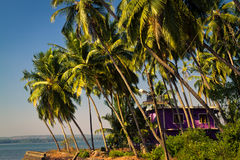 Beautiful house framed by palm trees on the sea shore royalty free stock photography