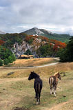 Beautiful house in the mountain with horses. Beautiful landscape in mountain with horses and a house Royalty Free Stock Photos