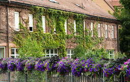 Beautiful house overgrown with ivy in Bavaria Royalty Free Stock Images