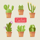 Beautiful house plants. Royalty Free Stock Photography