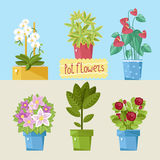 Beautiful house plants. Stock Photos