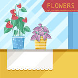 Beautiful house plants. Two plants are home on the windowsill stock illustration