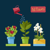 Beautiful house plants. Watering house plants from a watering can stock illustration
