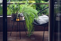 Free Beautiful House Plants With Water Droplets On Balcony Royalty Free Stock Image - 204475586