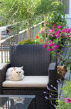 Beautiful house terrace with a lot of flowers and cat Royalty Free Stock Image