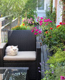 Beautiful house terrace with a lot of flowers and cat Royalty Free Stock Photo