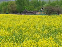 Beautiful house in the village beyond the spring field. 5 stock photos