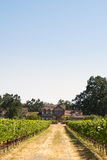 Beautiful house in a vineyard. Farmer house in a vineyard Stock Images