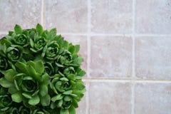Beautiful houseleeks, empervivum flower in the lower left corner, background white tiles Stock Images