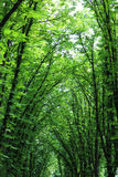 Beautiful huge green trees Royalty Free Stock Photography