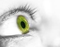 Beautiful human  green eye, macro, close up Royalty Free Stock Photography