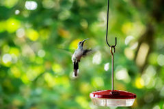 A beautiful hummingbird Royalty Free Stock Photos