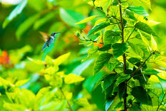Beautiful Hummingbird and a Flower. A small hummingbird in the green Stock Photo