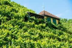 Beautiful hut in a vineyard Royalty Free Stock Photo