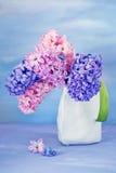 Beautiful hyacinth flowers . Stock Photos