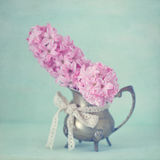Beautiful hyacinth flowers . Royalty Free Stock Images