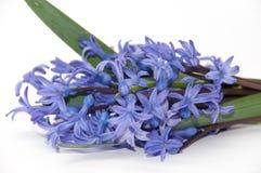 The beautiful hyacinth on white background Stock Photography