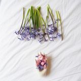 Beautiful hyacinth with a white hand royalty free stock photography