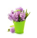 Beautiful Hyacinths Stock Photos