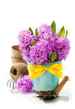 Beautiful Hyacinths and garden tools Stock Photo