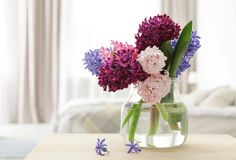 Beautiful hyacinths in glass vase on table indoors, space for text. Spring flowers stock photos