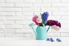 Beautiful hyacinths in watering can on table against brick wall, space for text. Spring flowers stock photo