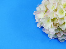 Beautiful hydrangea artificial flower bouquet on blue background Royalty Free Stock Images