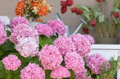 Beautiful Hydrangea Blossoms stock photos
