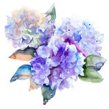 Beautiful Hydrangea blue flowers stock illustration