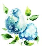 Beautiful Hydrangea blue flowers. Watercolor illustration stock illustration