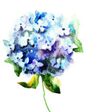 Beautiful Hydrangea blue flowers. Watercolor illustration royalty free illustration