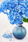 Beautiful hydrangea flowers Stock Image