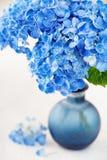 Beautiful hydrangea flowers Stock Image