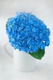 Beautiful hydrangea flowers Royalty Free Stock Photo