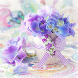 Beautiful hydrangea flowers Stock Images
