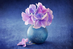 Beautiful hydrangea flowers Stock Photos