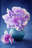 Beautiful hydrangea flowers Stock Photo