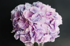 Beautiful hydrangea flowers in a vase on a table . Bouquet of light blue, lilac and pink flower. Decoration of home.  Stock Photography