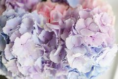Beautiful hydrangea flowers in a vase on a table . Bouquet of light blue, lilac and pink flower. Decoration of home.  Stock Images