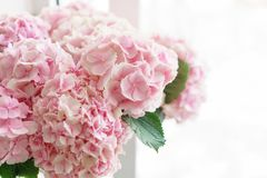 Beautiful hydrangea flowers in a vase on a table . Bouquet of light blue, lilac and pink flower. Decoration of home.  Royalty Free Stock Photography