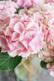 Beautiful hydrangea flowers in a vase on a table . Bouquet of light blue, lilac and pink flower. Decoration of home.  Royalty Free Stock Photos